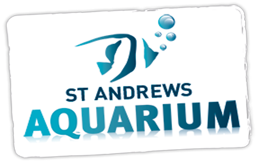 Things to do in St Andrews : St Andrews Aquarium